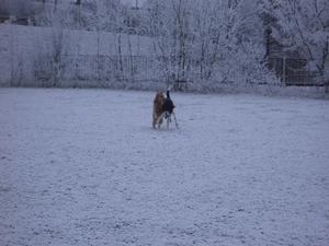 2007-12-22-frohe-weihnachten