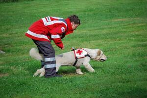 Emma: geprüfter Rettungshund