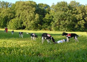 Die Rettungshundestaffel des BRK Regensburg gehört zu den Gewinnern